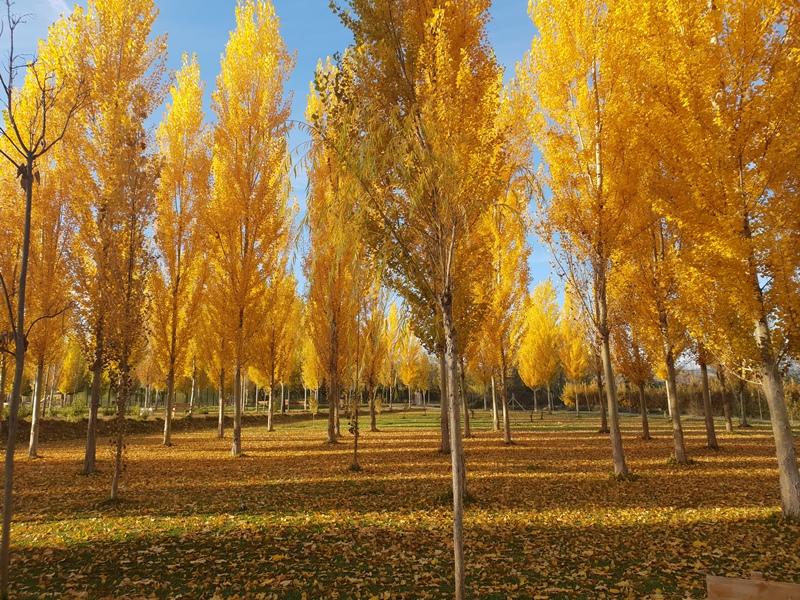 balneario otoño